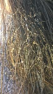 襟足の毛がチリチリ 治し方 シリコーンリムーバー 美容室 りずむヘアデザイン