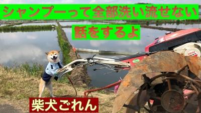 柴犬を見ながら YouTube りずむヘアデザイン 土浦市 美容室 最低限ノンシリコーン シリコン病
