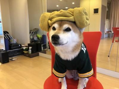 YouTube 柴犬を見ながら髪質・肌質改善チャンネル 土浦市 美容室 りずむヘアデザイン リズムヘアデザイン 還元美容