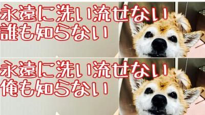 YouTube 柴犬を見ながら髪質肌質改善チャンネル 柴改 りずむヘアデザイン 土浦市 美容室 美養室
