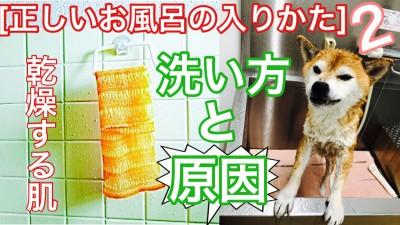 柴改 正しいお風呂の入り方 柴犬を見ながら髪質肌質改善チャンネル 土浦市 美容室 美養院 りずむヘアデザイン