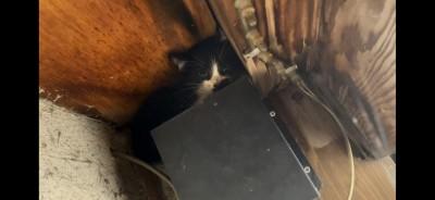 招き猫 りずむヘアデザイン 土浦市 美容室
