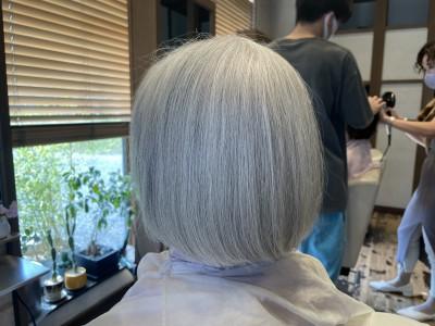 シルバーアッシュ シルバー アッシュ ボブ 還元美容 りずむヘアデザイン 土浦市 美容室